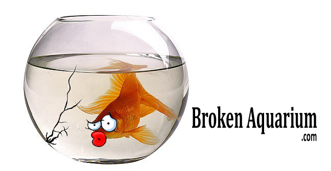 broken aquarium new website
